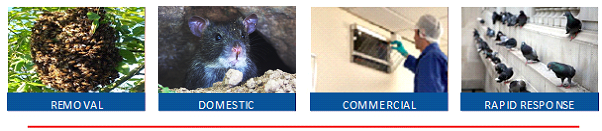 PestForce Pest Control in Cardiff