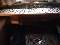 Cluster flys Petersfield